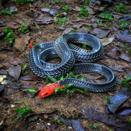 Nằm mơ thấy rắn – Loài vật linh thiêng mọi người cần lưu ý