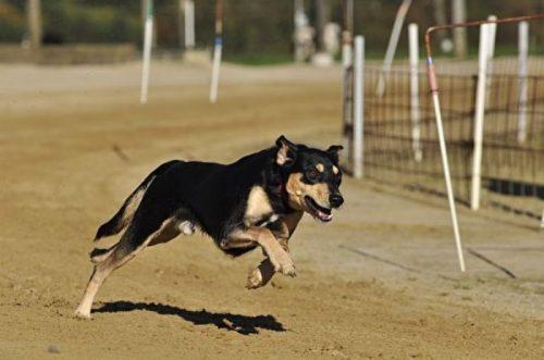 Chó đuổi bạn bè của bạn có ý nghĩa như nào?