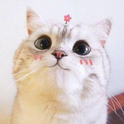 Nằm mơ thấy mèo – Loài vật đặc biệt trong phong thủy cần lưu ý